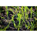K zapůjčení - Aerifikační vidle na trávník