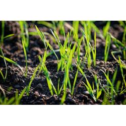 K zapůjčení - Provzdušňovací vidle na trávník